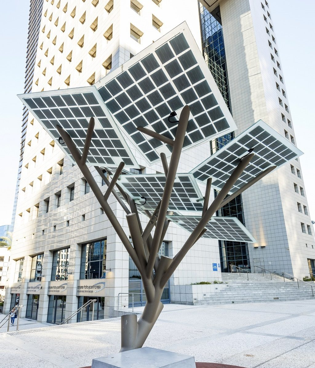 Zonneboom vooraanzicht